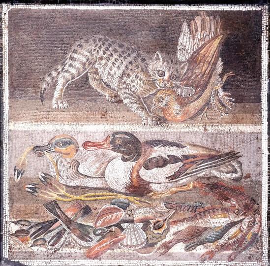 Cat_birds_MAN_Napoli_Inv9993