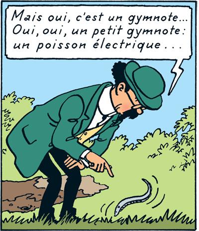 tournesol-gymnote
