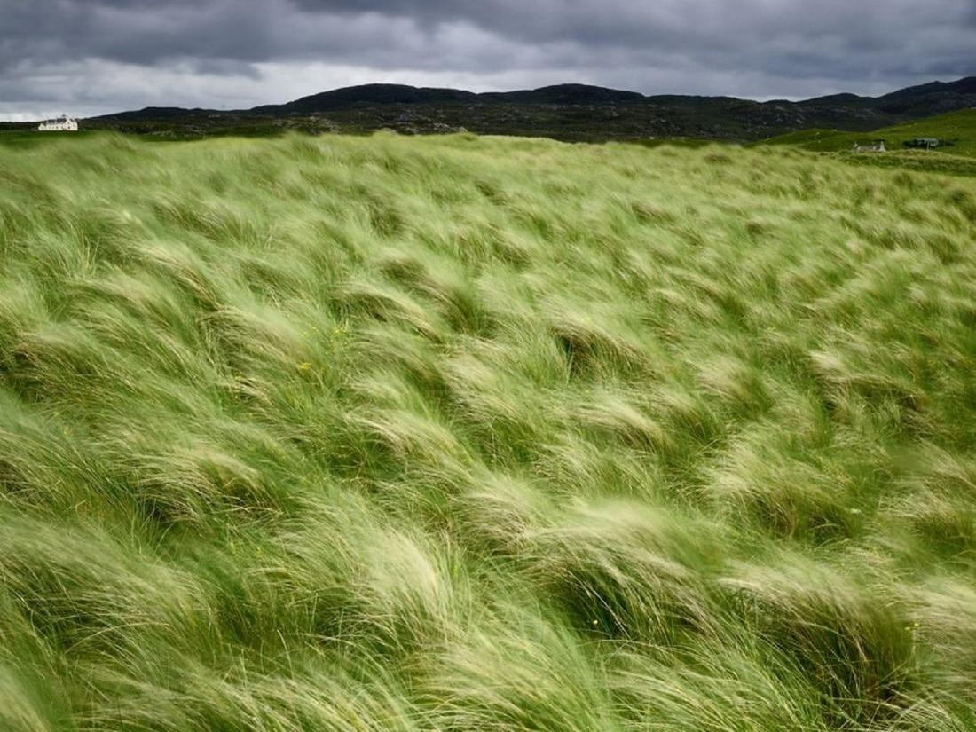 beach-grass-scotland_25292_990x742