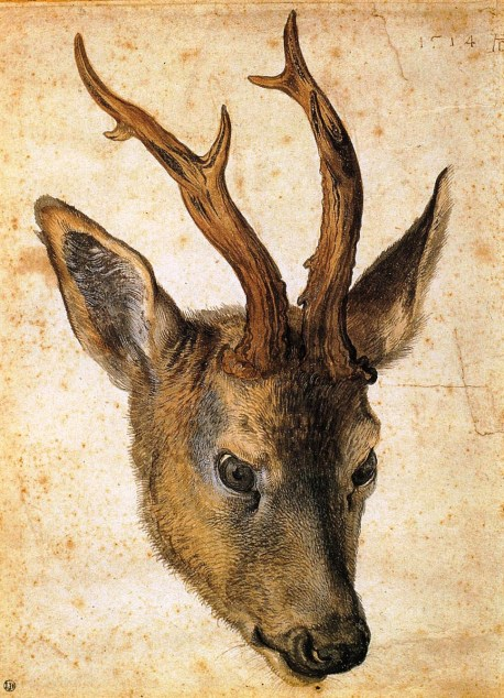 head-of-a-stag