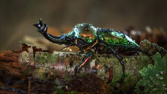 Beetle-horns-insect-macro-photography-water-droplets_3840x2160