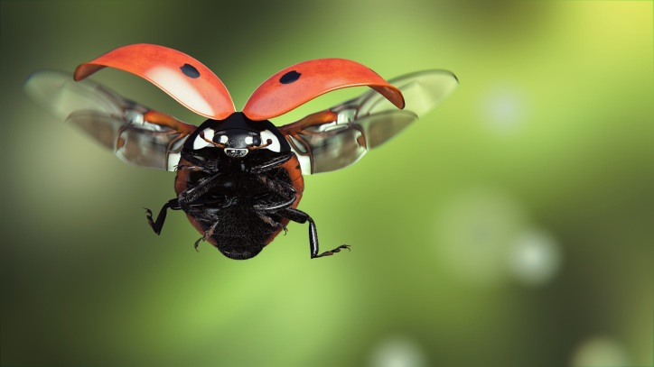 Ladybug-flight-wings-insect-macro-photography_1920x1080